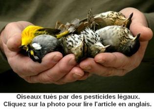 pesticides2
