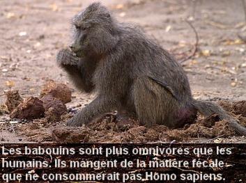 babouinomni