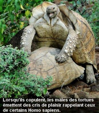 tortue_.1plantes