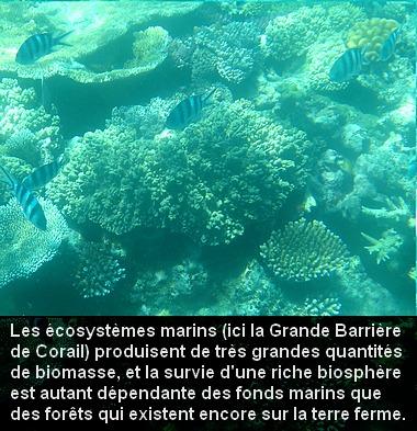 corail_ecosysteme_1