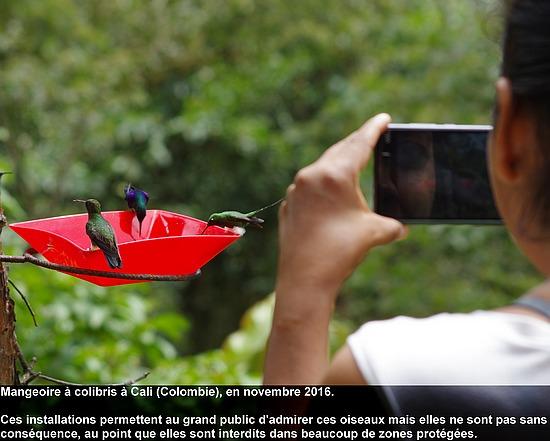 colibris_nourriture1