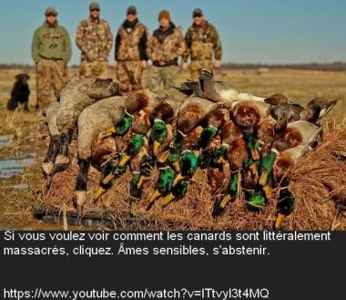 horreur_chasse.jpg