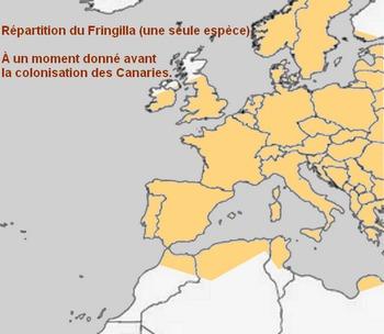 Fringilla_map2.jpg