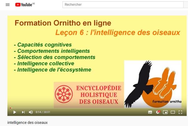 couvertureintelligence2.jpg
