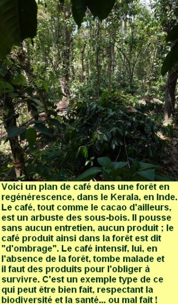 cafe_ombrage_kerala_inde
