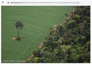 deforestation_soja_bresil_amazonie_greenpeace